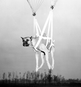 dog in parachute